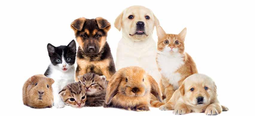 Prodotti per gli animali domestici